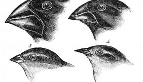 """""""Darwin's Finches"""""""