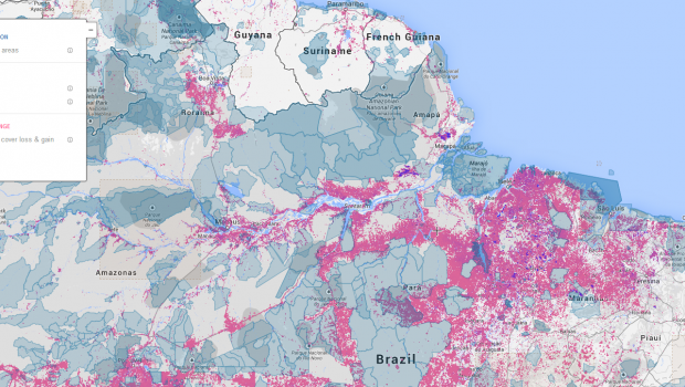 A screenshot from the Global Forest Watch tool.