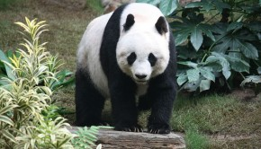 A new database will help zoos in Japan coordinate breeding rare species.