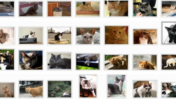 A 10,000-cat database is available for research download.
