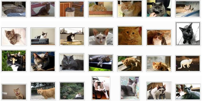 10,000 Cat Pictures (For Science) – Center for Data Innovation