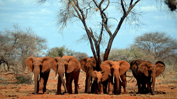 Using Big Data to Save Africa's Elephants